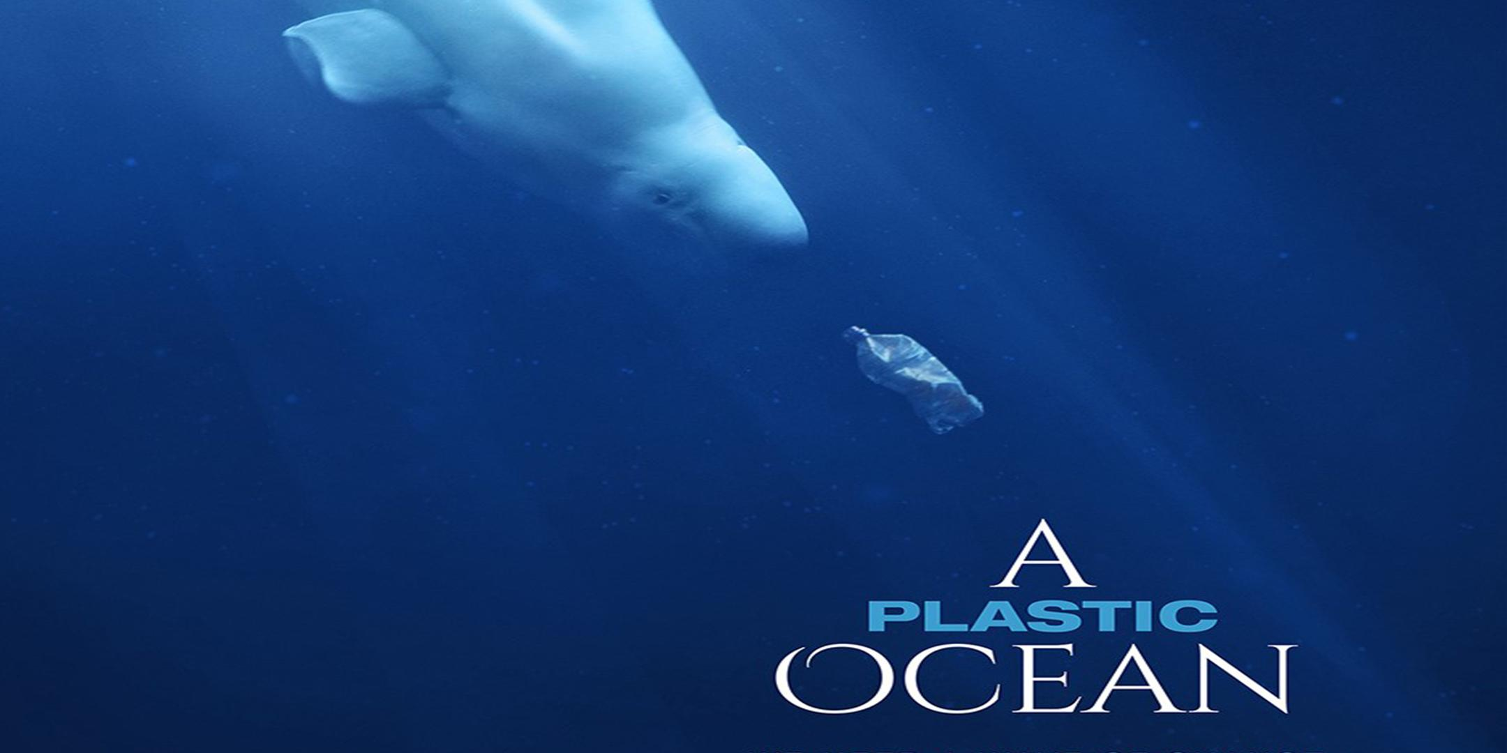 A Plastic Ocean – Q&A WITH THE BEACH CO-OP & PETCO